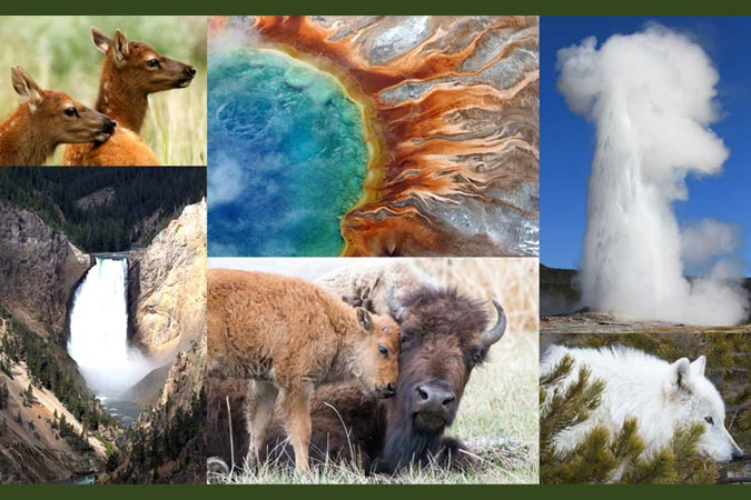 Canon Celebrating 20 Years of Sponsorship with Yellowstone Forever