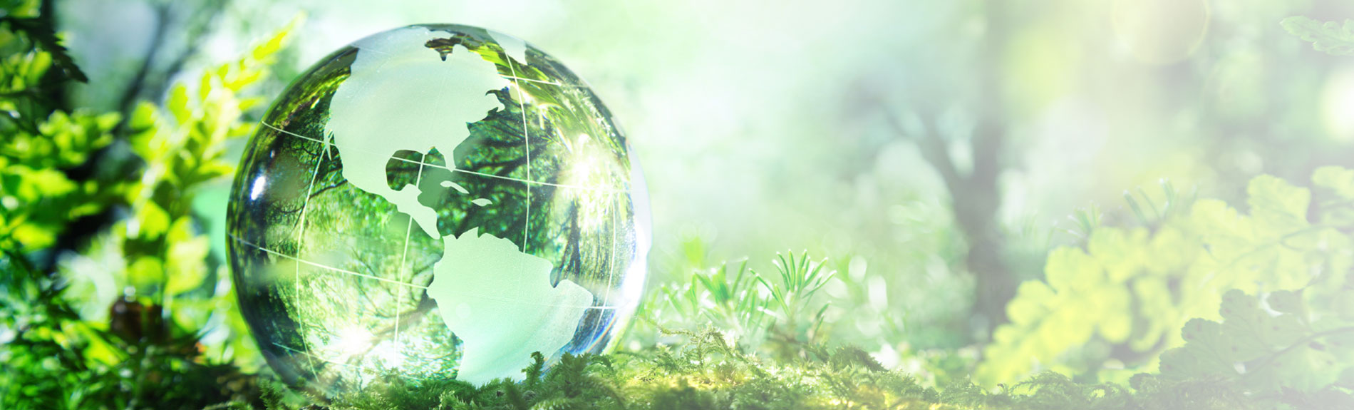 glass globe of the earth against foilage