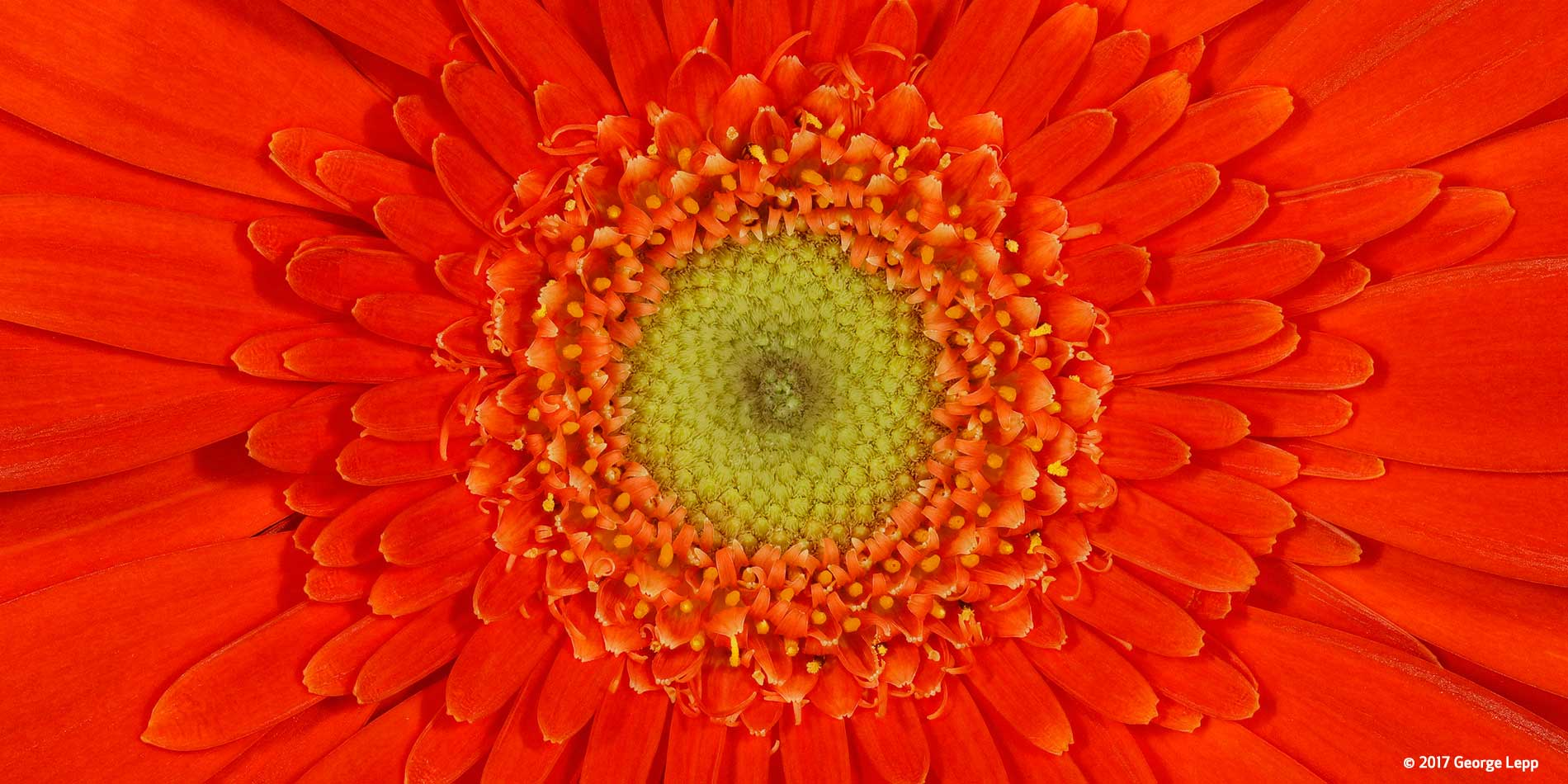 Canon See Impossible - George Lepp - Gerbera Daisy