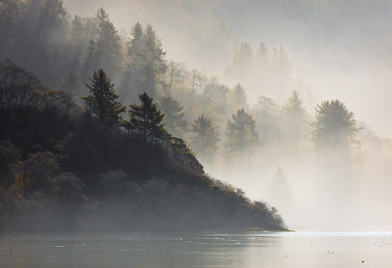 Mist rolling along the water surface and up into the trees where a mountain and lake meet