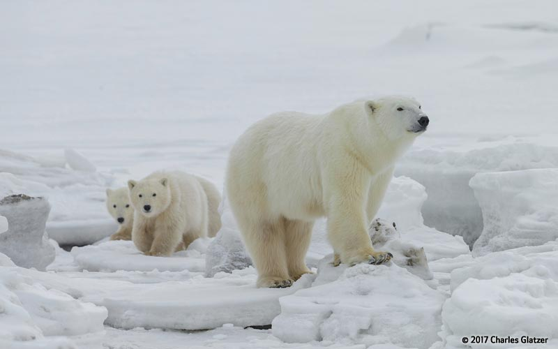 Canon See Impossible - Charles Glatzer - Polar Bear Family