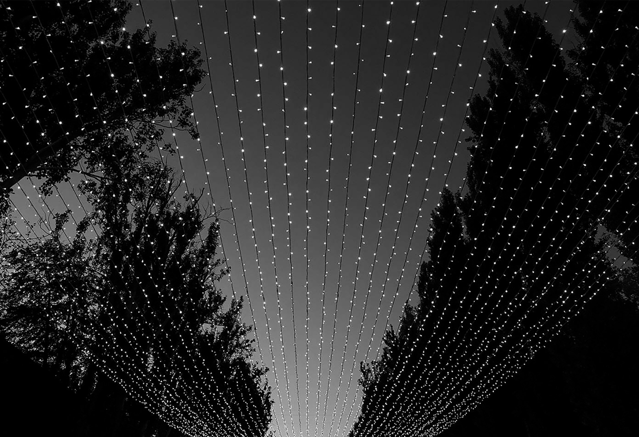 black and white photo of rows of string lights surrounded by silhouettes of trees