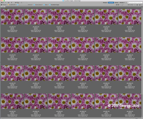 Canon See Impossible - George Lepp - Purple Daisies Screenshot